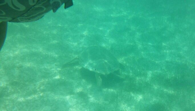 Akumal beach turtle cove snorkel cya Carnival excursions