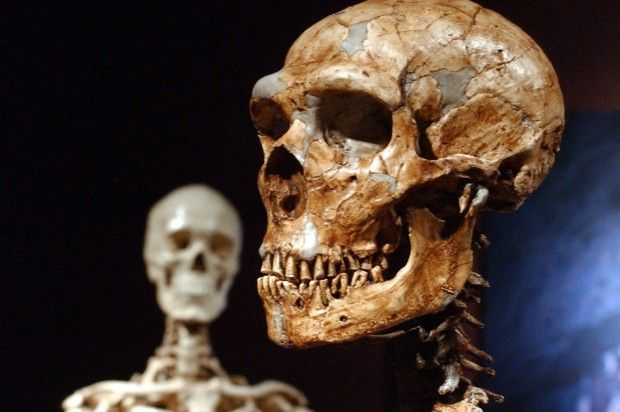 Scientists: Prehistoric Neanderthal sex linked to several modern-day diseases