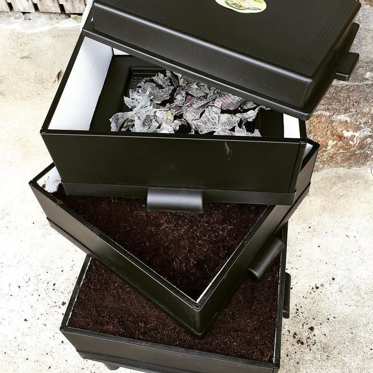 Got started producing organic compost by earthworm; Eisenia fetida. ミミズコンポストを始めた生ゴミを有機堆肥に変えてくれる#earthworm #compost #organic #ミミズ #コンポスト #オーガニック