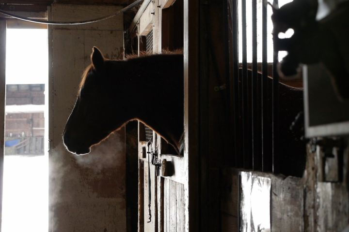 Equine therapy a growing trend in treating mental health issues