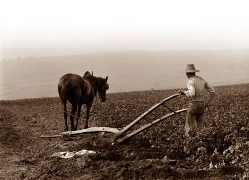 My grandfather had a plow like this that he used in the garden.
