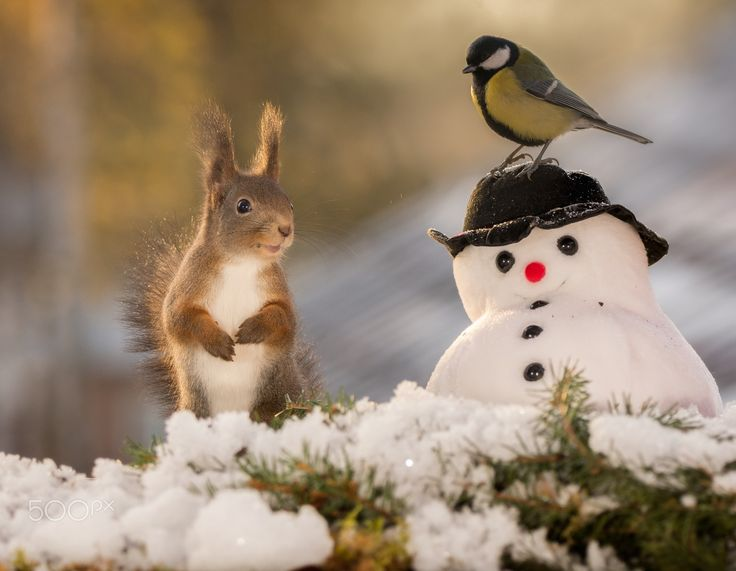 snowman with birdhat - red squirrel standing with a snowman and a titmouse on it with back light