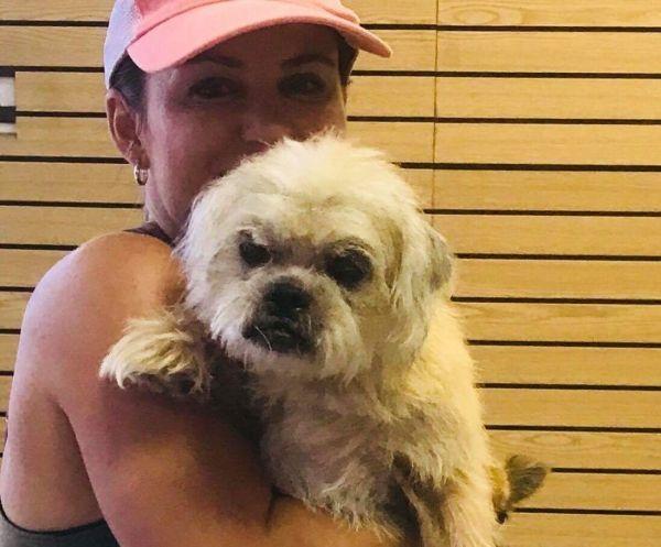 Rockie Adoptable Dog Senior Male Shih Tzu Cairn Terrier Mix