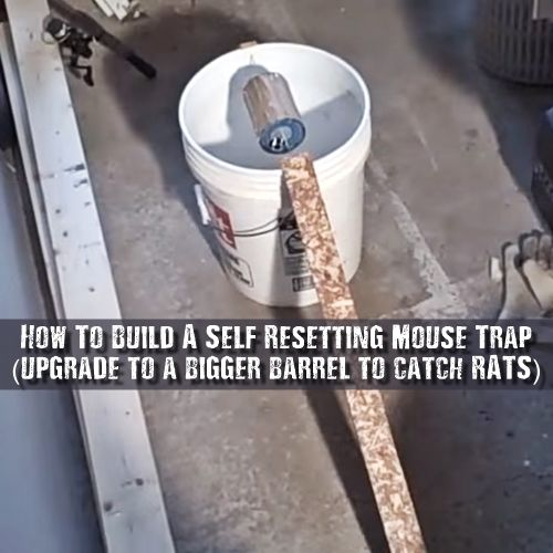 how to build a self resetting mouse trap use this trap to humanely catch mice or rats let them. Black Bedroom Furniture Sets. Home Design Ideas
