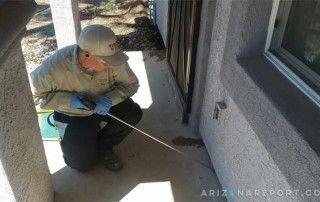 Phoenix AZ Termite Contractor