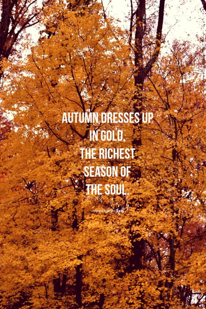 16 Autumn Quotes To Enchant And Deepen The Soul Nature Quotes