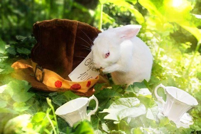Alice-in-Wonderland Inspired Photoshoot by Rachele Totaro l Animals Rescued from Labs l The March Hare l La Collina dei Conigli l #fairytale