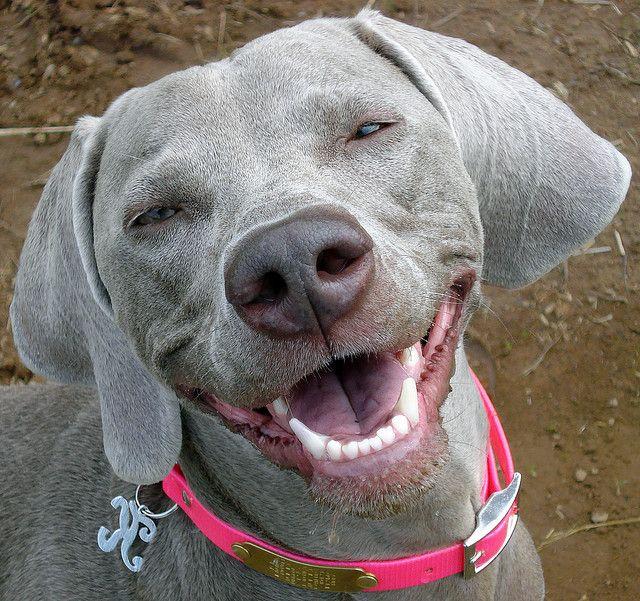 smiling, happy dog.