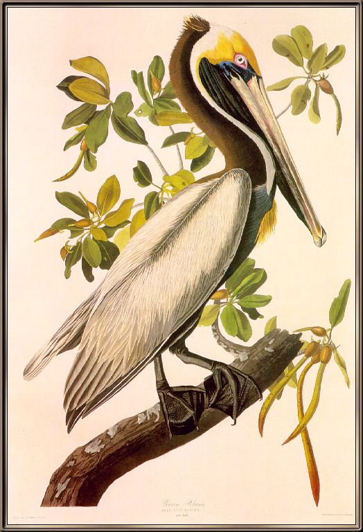 John James Audubon Painting