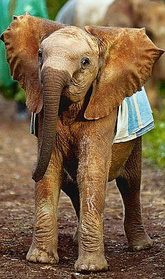 Orphan at the David Sheldrick Wildlife Trust, I think sities As she looks exactly like this in Born to be wild