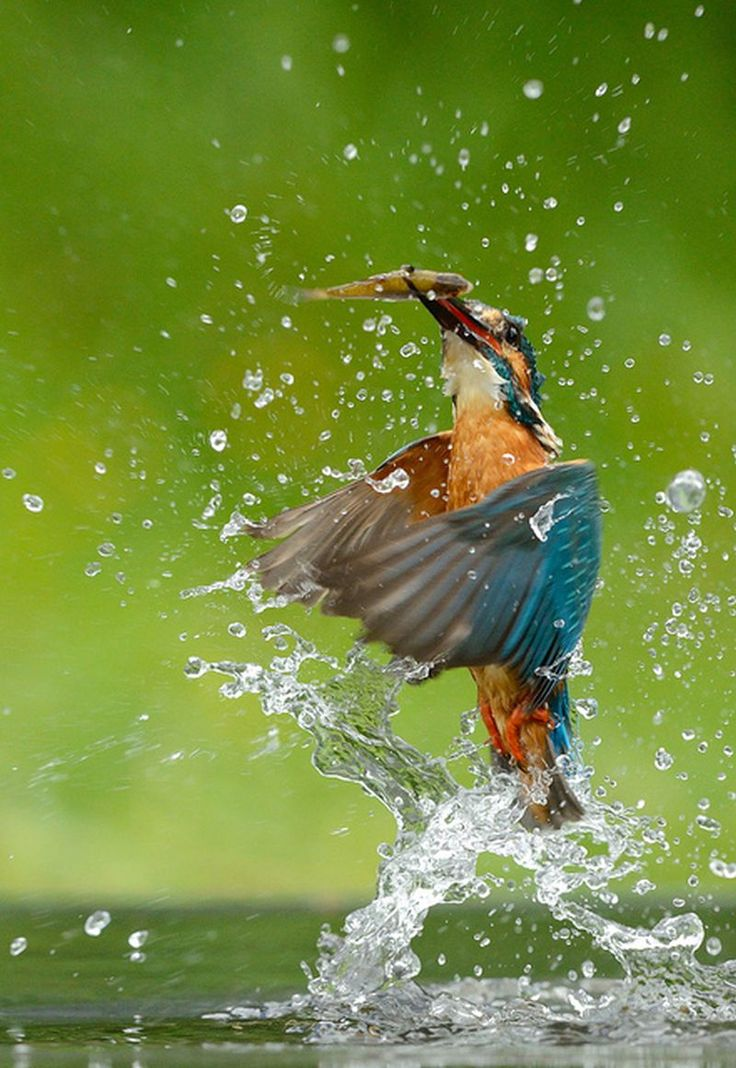 Kingfisher catched the fish. Source: http://furkl.com/ Online Appearance: http://appearoo.com/SubratoPaul