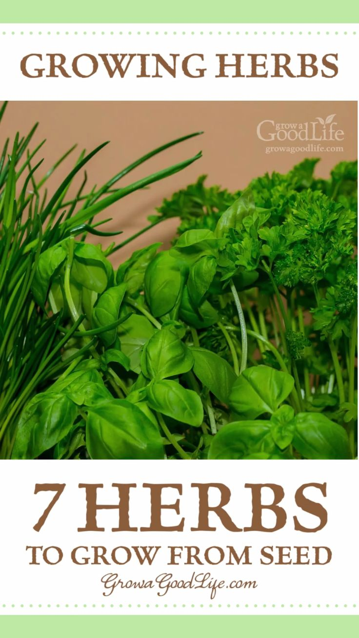 Growing herbs 7 herbs to start from seed video