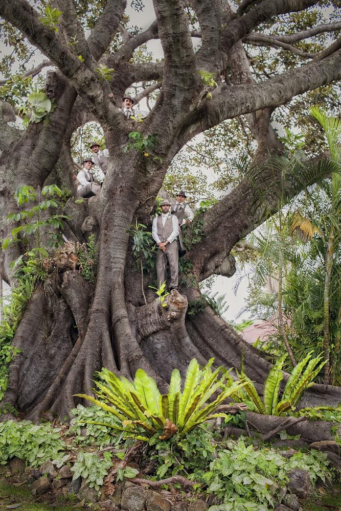 Byron Bay Fig Tree : Fig Tree Restaurant Wedding ...