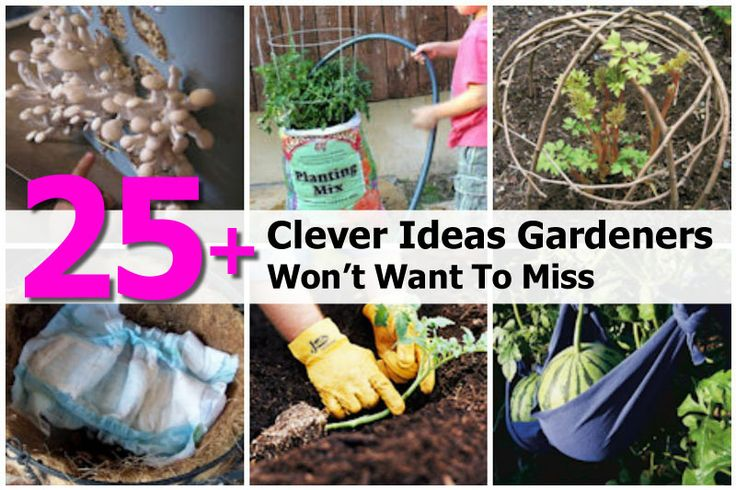 25+ Clever Ideas Gardeners Won't Want To Miss - http://www.hometipsworld.com/25-clever-ideas-gardeners-wont-want-to-miss.html