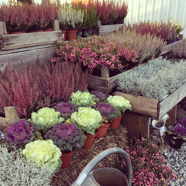 Det vil være salg av masser av høstblomster på markedet til søndag med hele 22 andre utstillere  det vil være salg av fersk frukt og grønnsaker, ferske bakevarer som boller, kanelsnurrer og brød, lokal mat, barneklær, smykker, skjerf, strikketing, ting til de minste, vognposer, treting, blomster, kaffe, interiør , ting til hjemmet og masse masse mer  vi gleder oss og håper så veldig på at dere kommer alle sammen slik kan vi fortsette med markeder som dette, og slik ønsker utstillerne å...