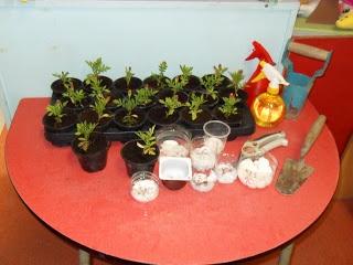 Welkom in het 1ste leerjaar van juf Els: Thema Lente: planten en zaaien