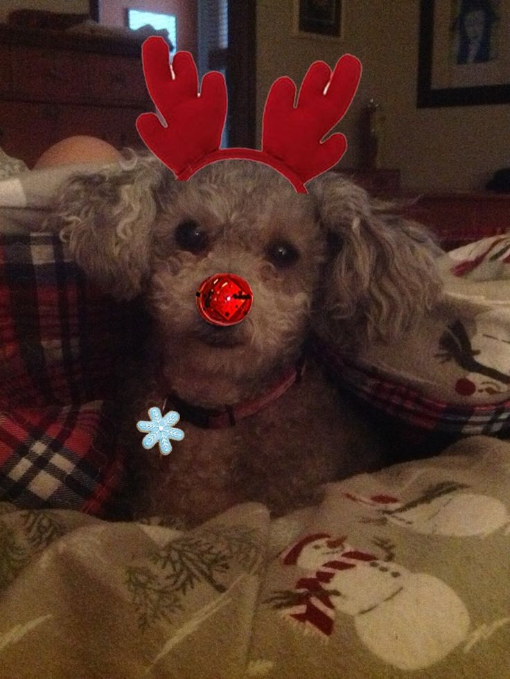 Coady loves Christmas!