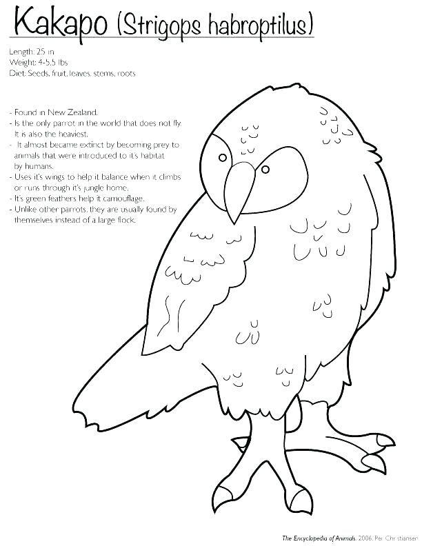 New Zealand Color Pages Kiwi Bird Bird Crafts Preschool Bird