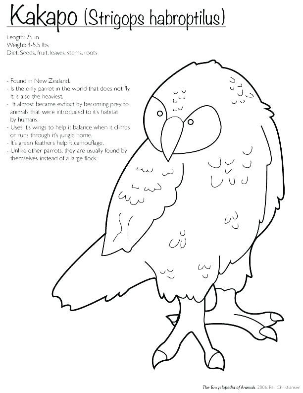 New Zealand Coloring Pages Extinct Animals Coloring Pages
