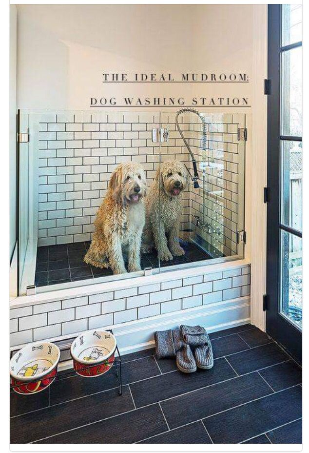 125 best kennel ideas images on pinterest pets animales and dog cat dog washing station the bathroom downstairs maybe mudroombathroomshower and dog washing station solutioingenieria Images