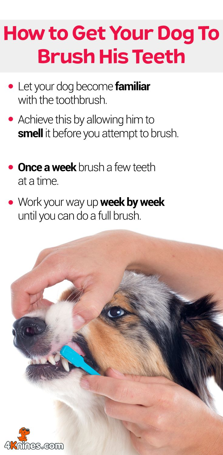 Here's a great way to help your dog brush his teeth regularly.