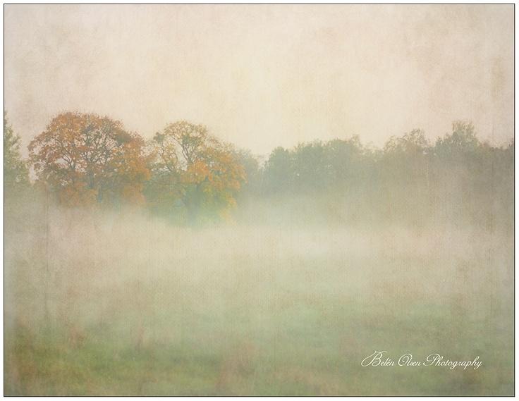 La niebla y el bosque- Otoño en Suecia: Autumn, The Forest, The Fog