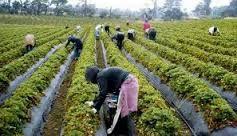 Βοιωτία: 1110 μετανάστες για εργάτες γης - υπεγράφη η νέα ΚΥΑ