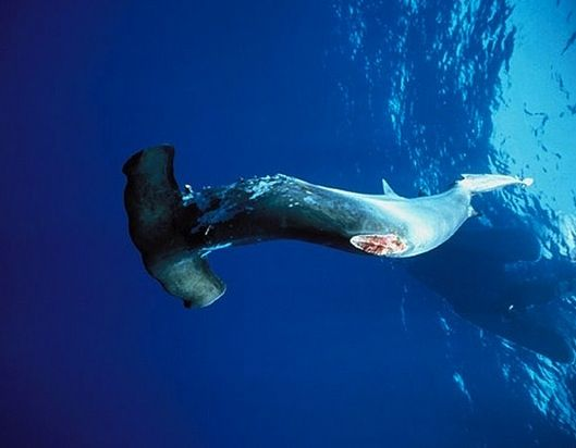 17 best images about sharks and shark finning on pinterest for Shark tank fairy door