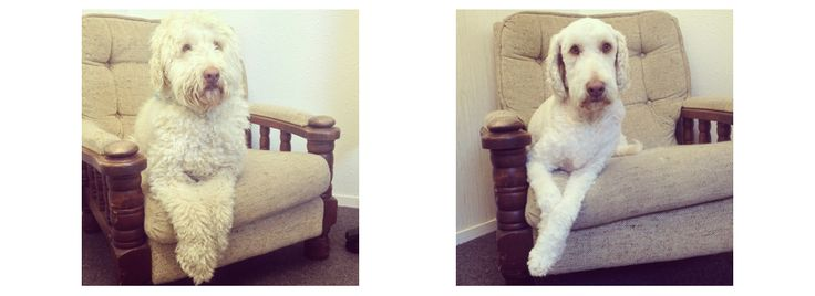Gorgeous George Grooming for Dogs Dog Grooming Gallery - Gorgeous George Grooming for Dogs