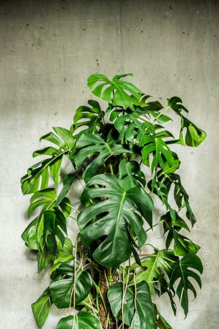 Large Leaf Outdoor Plants