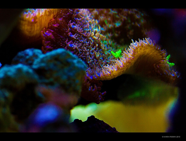 Tropical Reef {EXPLORED!} by RiaPereira - back and catching up!, via Flickr