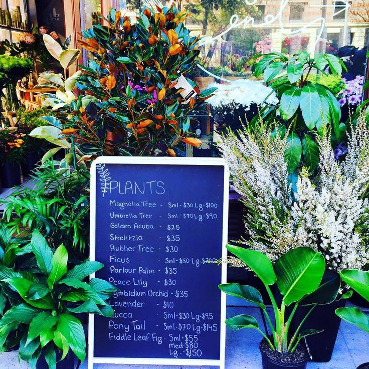 Gallery — East End Flower Market, Adelaide