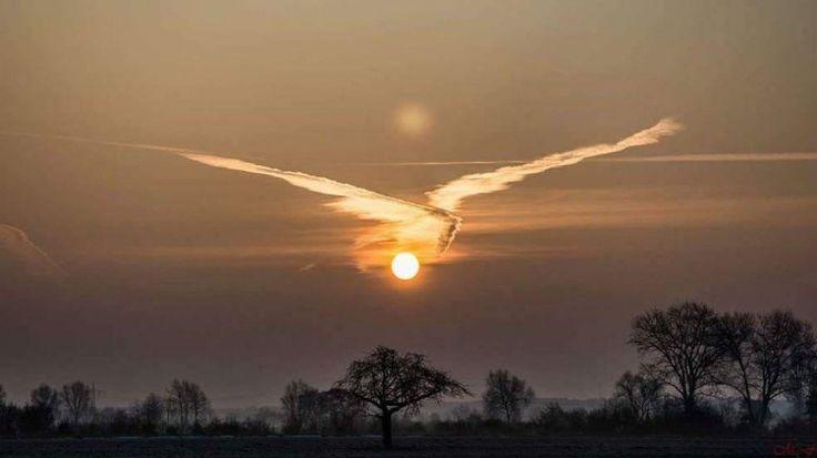 Il sole con le ali di un uccello ♥ Seguici su www.reflex-mania.com