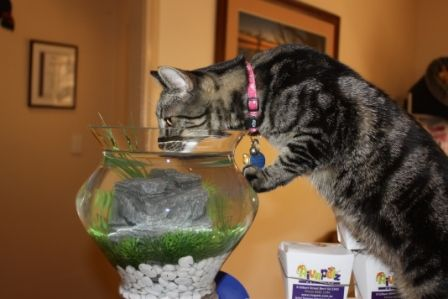 """""""This is a great water bowl!"""""""
