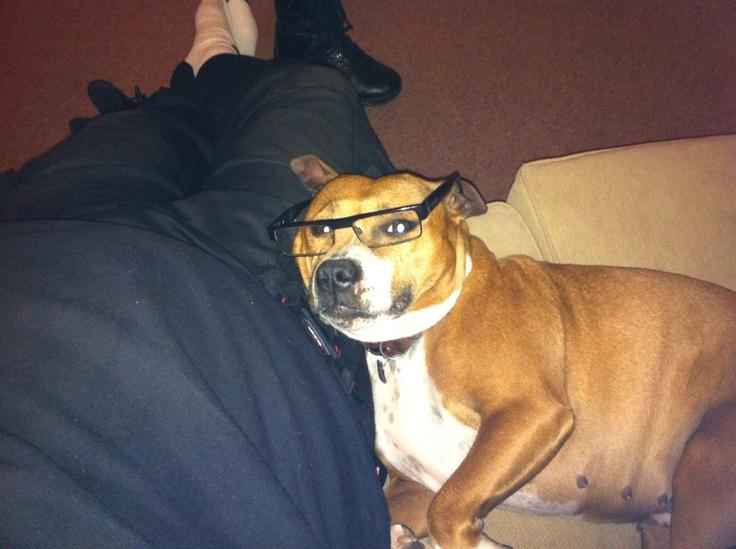 Frankie looking intelligent!