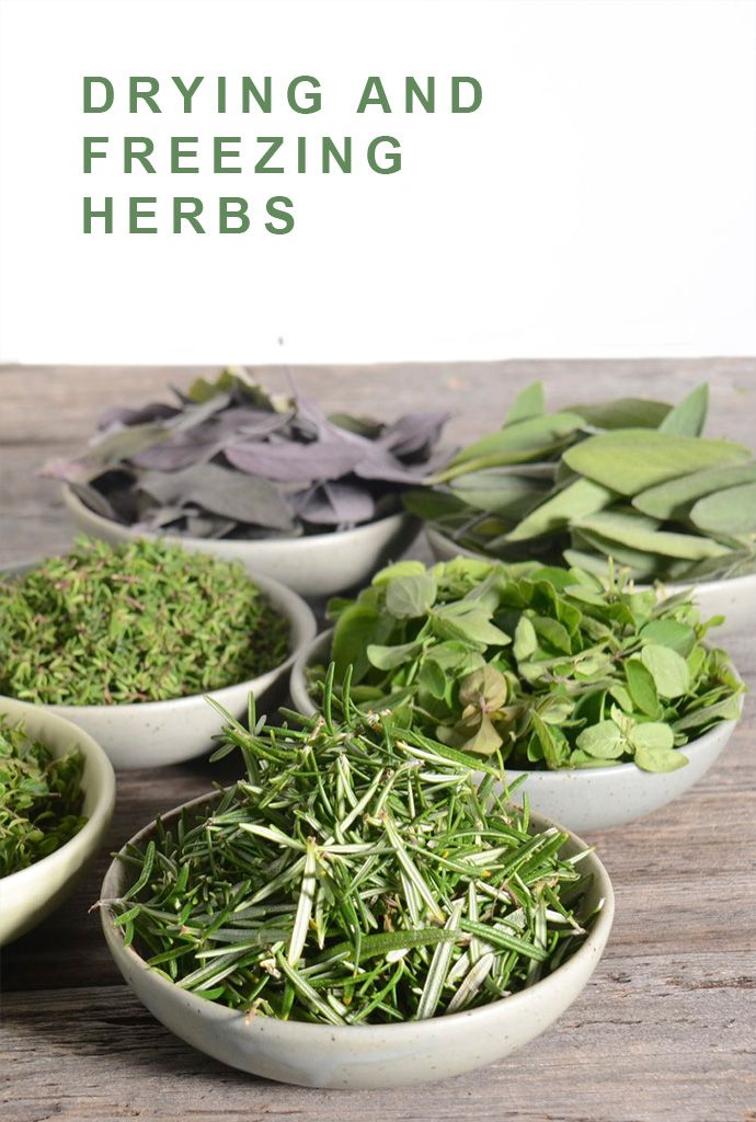 Freezing and drying herbs