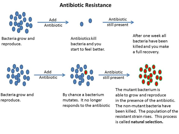 How Do Antibiotic Resistant Bacteria Show Natural Selection At Work