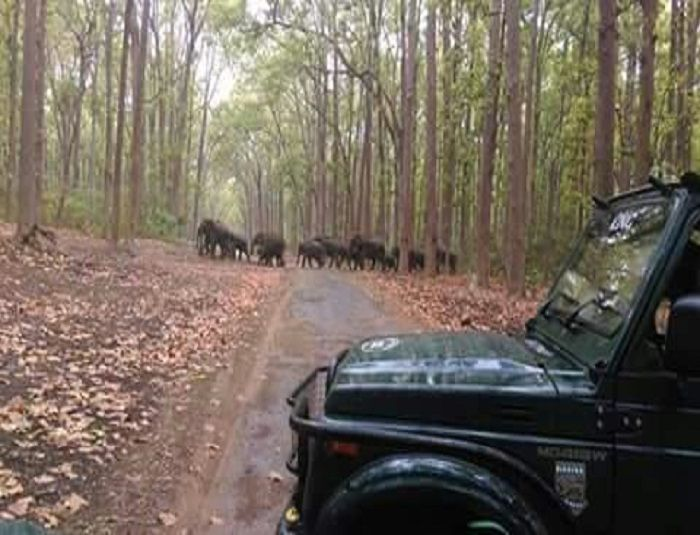 Welcome to Safari Booking to Corbett National Park