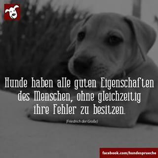 Mehr Hundesprüche auf >>> www.facebook.com/hundesprueche #hund #hunde…