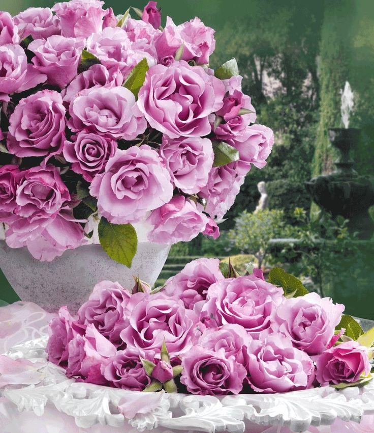 Unique Parfum Rose uDioressence u Pflanze jetzt g nstig in Ihrem MEIN SCH NER