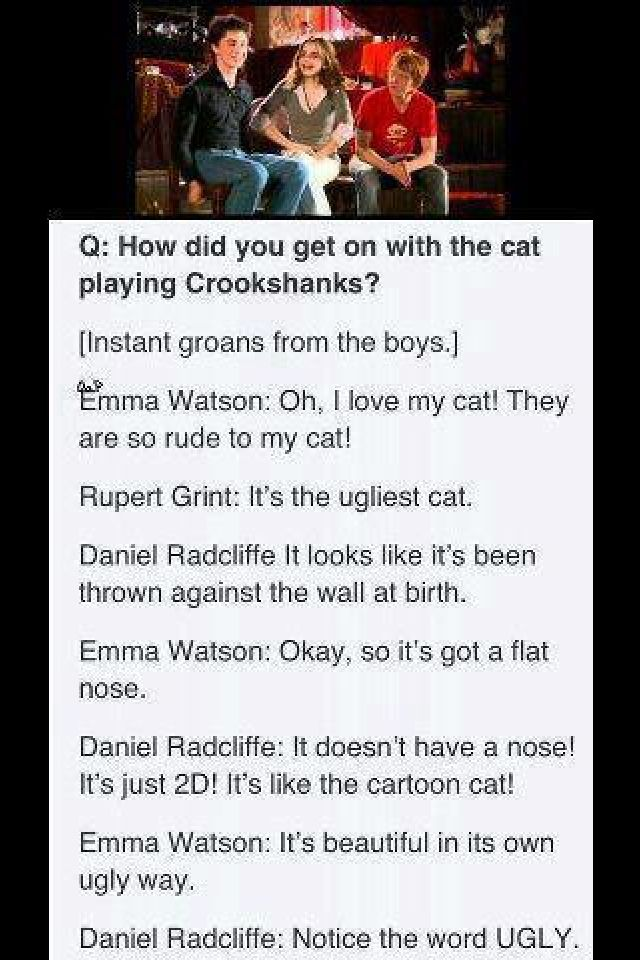 The book Crookshanks is the exact description of my grandma's cat who was called Cassy. It was a he.