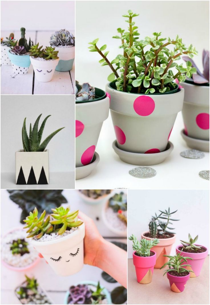 Vasinhos fofos de plantas