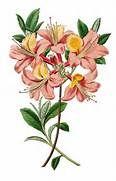 Vintage Botanical Illustrations Related Keywords & Suggestions ...