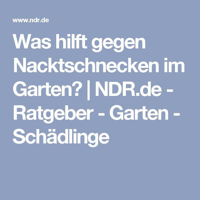 Was hilft gegen Nacktschnecken im Garten? | NDR.de - Ratgeber - Garten - Schädlinge
