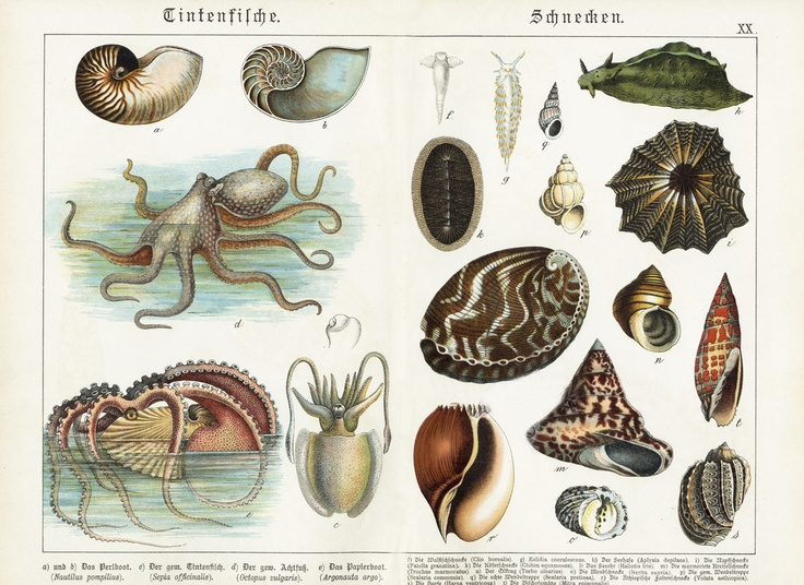 research on mollusks View freshwater mollusks research papers on academiaedu for free.