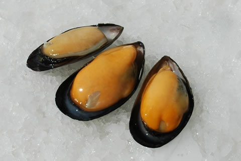 Chile's Patagonia Mussel