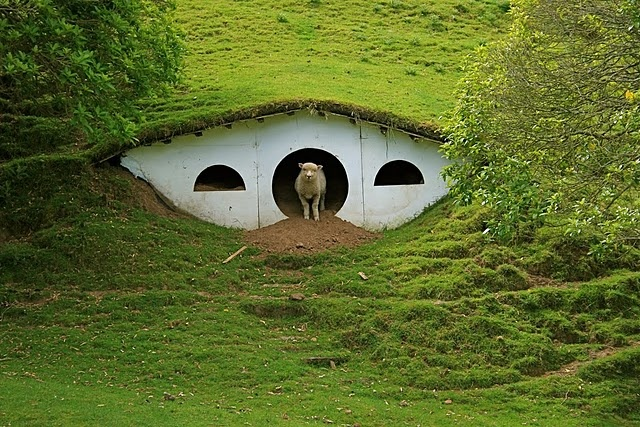 New Zealand - the homes of the Hobbits in Lord of the Rings