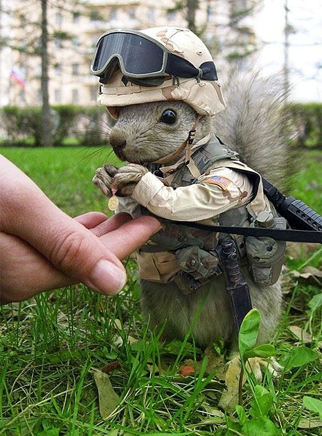 Captain Squirrel
