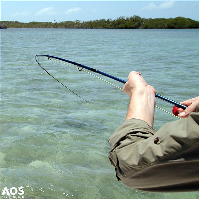 Hope this Friday brings a deep bend into your fly rod