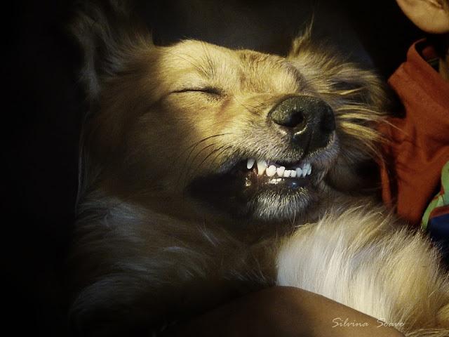 Hora de dormir: Time, Sleeping, Imágenes Favoritas, My Pictures